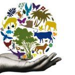 sustainable development training